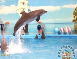 NEMO Dolphin Show Phuket